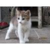 Подарую добрим людям кішечку (3 місяці)
