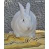Продаю кролики - Венский белый